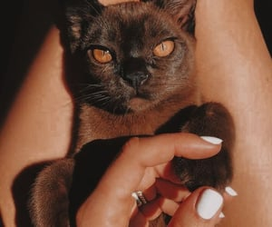 beige, aesthetic, and cat image