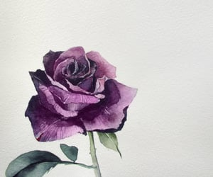 rose, watercolor painting, and botanical illustration image