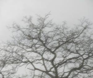 black, creepy, and evening image