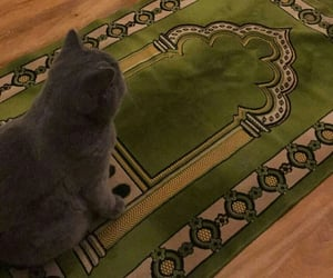 cat, cats, and islam image