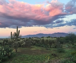 sky, cactus, and nature image