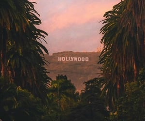 hollywood, palm trees, and sunset image