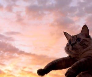 cat and sky image