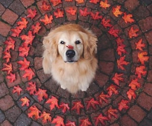 dog, animals, and autumn image