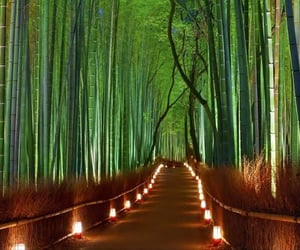 japan, forest, and light image