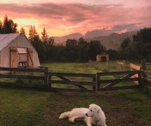 animals, dog, and farm image