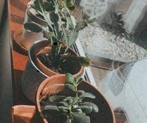 aesthetic, green, and houseplants image