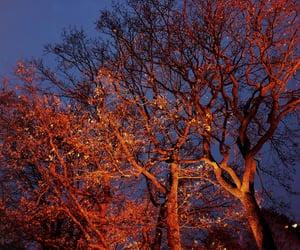 autumn, night, and orange image