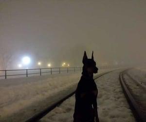 dog, dark, and doberman image