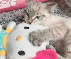 aesthetic, cat, and cute cat image