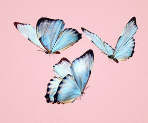 blue, butterfly, and animal image