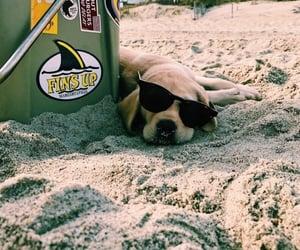 beach, animals, and dog image