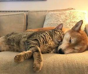 animal, cat, and dog image