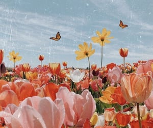 flowers, aesthetic, and butterfly image