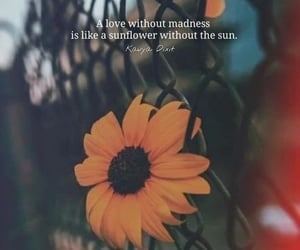 inspiration, poems, and sunflower image