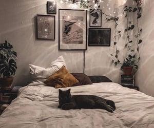 plants, home, and lights image