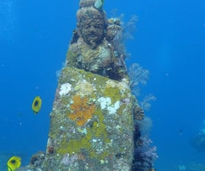 diver, diving, and underwater image