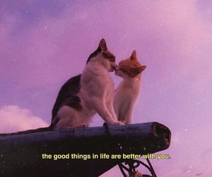 cat, pink, and love image