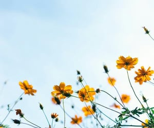 flowers, sky, and spring image