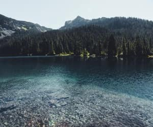 forest, scenery, and lake image