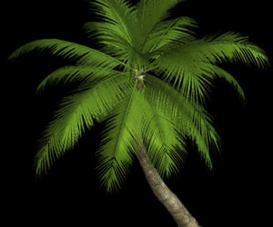 aesthetic, coconut trees, and editing image