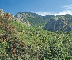 forest, mountain, and Greece image