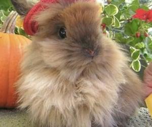 bunny, cottagecore, and aesthetic image