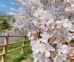 april, flowers, and japan image