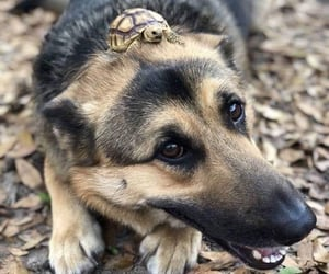 animal, dog, and turtle image