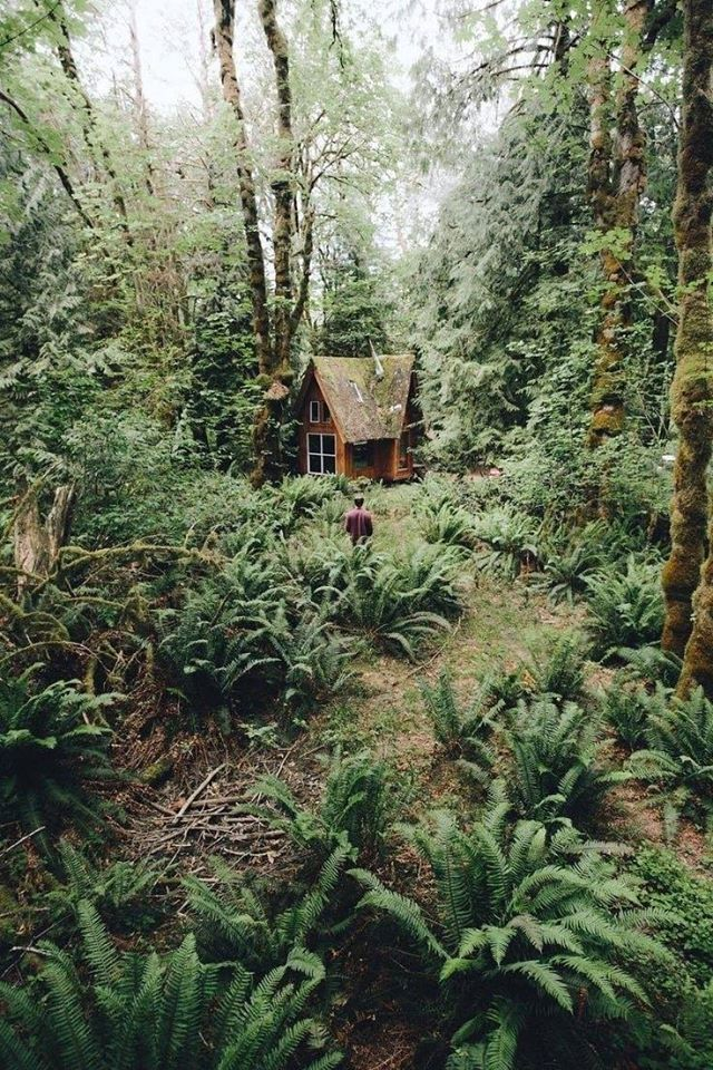 forest, nature, and cabin image