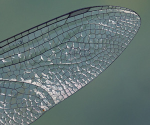 dragonfly, stained glass, and wing image
