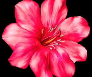 editing, flower, and overlay image