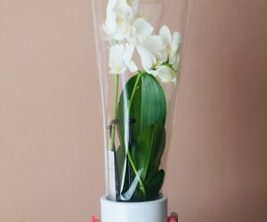 flower, orchid, and gift image