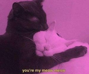 cats, hugs, and kiss image