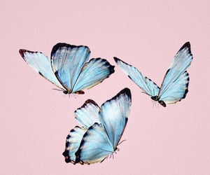 blue, animal, and butterfly image