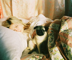 pug, bed, and dog image