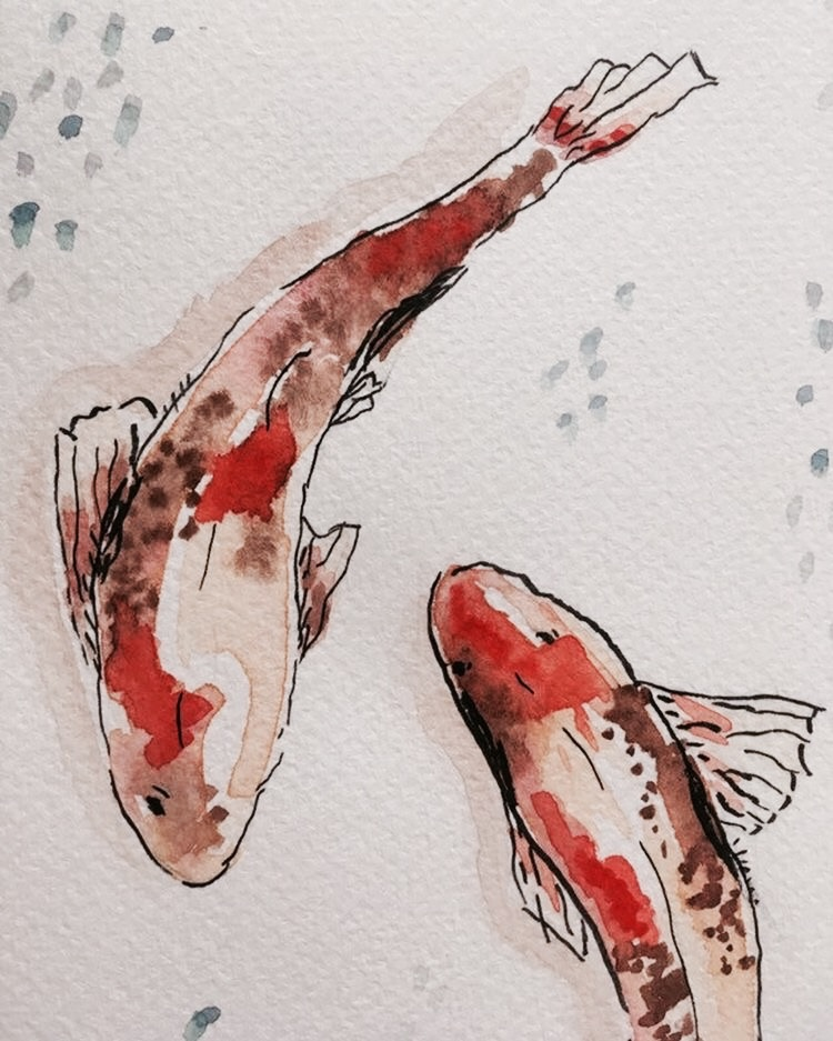 fish and red image