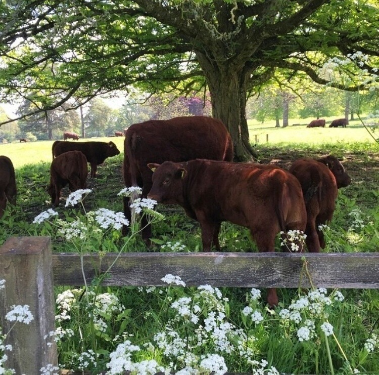 cows, nature, and aesthetic image