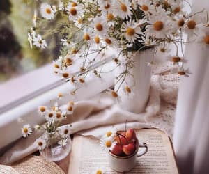 flowers, daisy, and book image