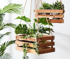plants, diy, and green image