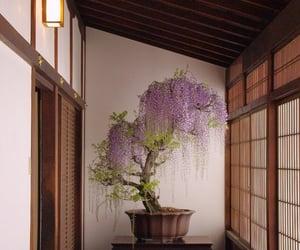 bonsai, japan, and asia image