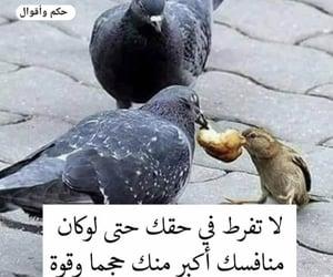 ﻻ, ﻋﺮﺑﻲ, and ظلم image