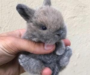conejos image