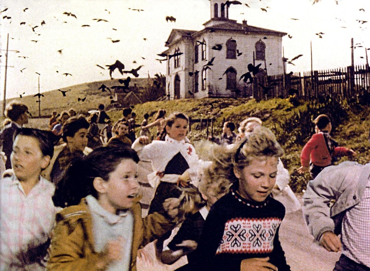 birds and movie image