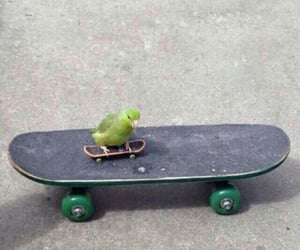 bird, cute, and skate image