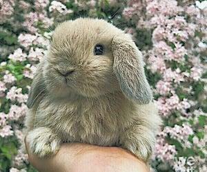 adorable and bunny image
