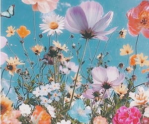 flowers, butterfly, and nature image