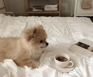 dog, aesthetic, and coffee image