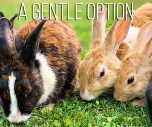 pet, rabbits, and pets image