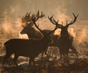 animals, challenge, and nature image